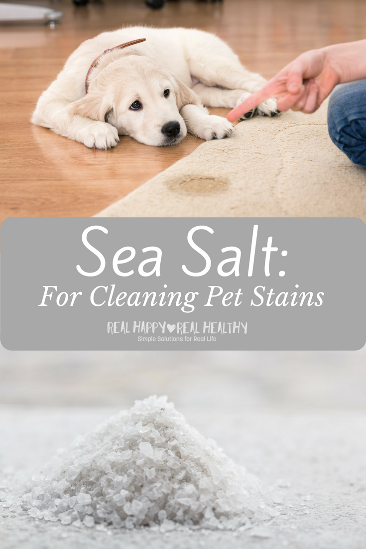 Salt for Cleaning Pet Stains
